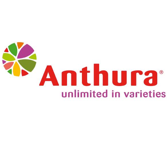 Anthura | Unlimited in varieties