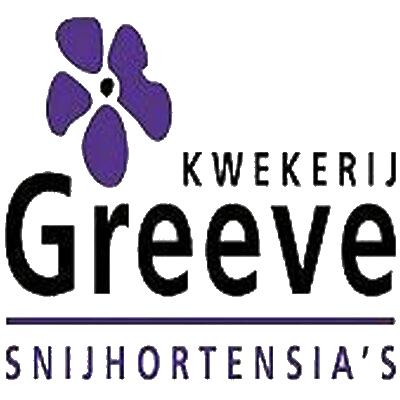 Kwekerij Greeve | Snijhortensia's