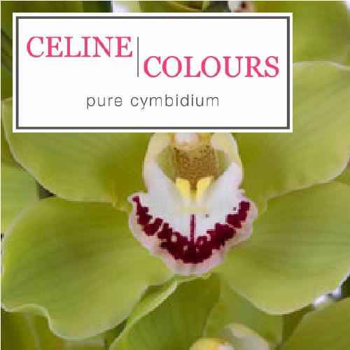 Celine Coulors | Orchidee kwekerij