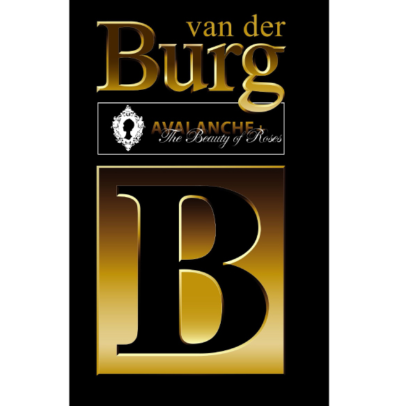 van der Burg | The beauty of Roses